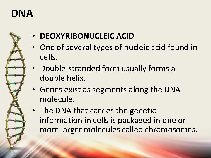 DNA • DEOXYRIBONUCLEIC ACID • One of several types of nucleic acid found in
