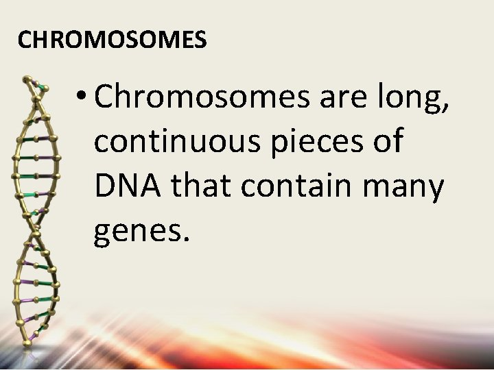 CHROMOSOMES • Chromosomes are long, continuous pieces of DNA that contain many genes.
