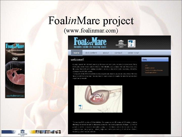 Foalin. Mare project (www. foalinmar. com) 10