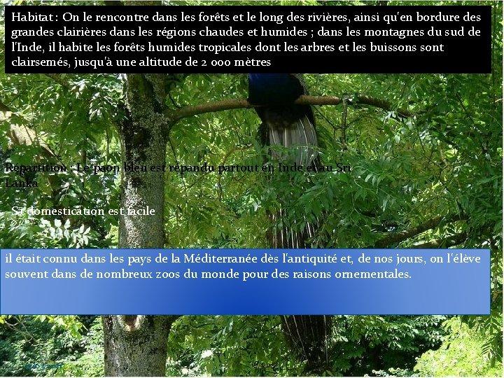 Habitat : On le rencontre dans les forêts et le long des rivières, ainsi