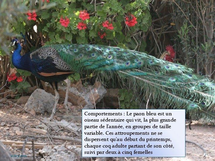 12/03/2021 Comportements : Le paon bleu est un oiseau sédentaire qui vit, la plus