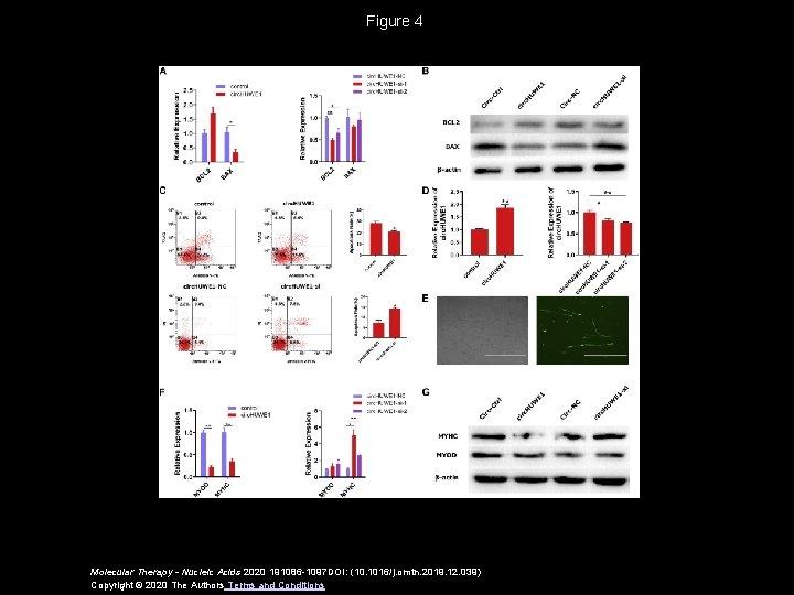 Figure 4 Molecular Therapy - Nucleic Acids 2020 191086 -1097 DOI: (10. 1016/j. omtn.