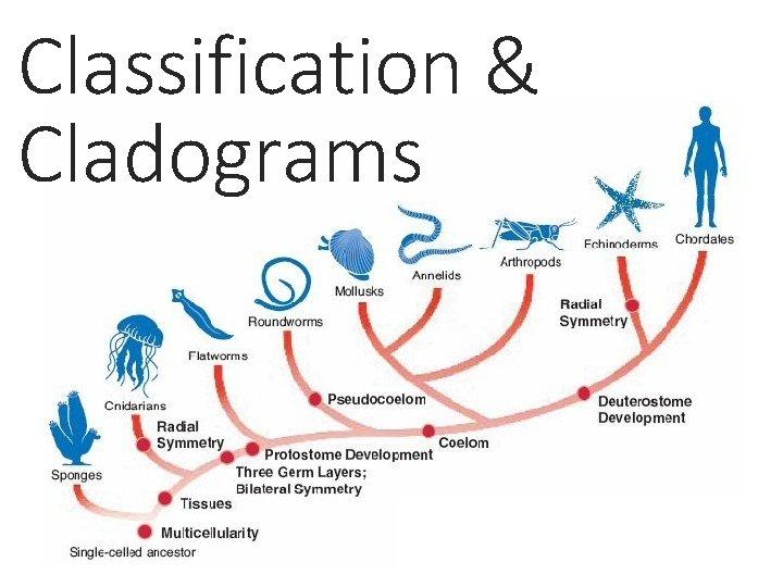 Classification & Cladograms