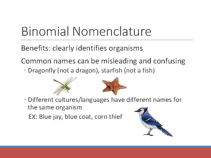 Binomial Nomenclature Benefits: clearly identifies organisms Common names can be misleading and confusing ◦