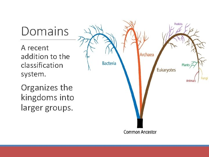 Domains A recent addition to the classification system. Organizes the kingdoms into larger groups.