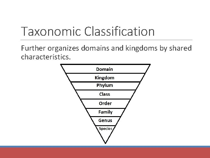 Taxonomic Classification Further organizes domains and kingdoms by shared characteristics.