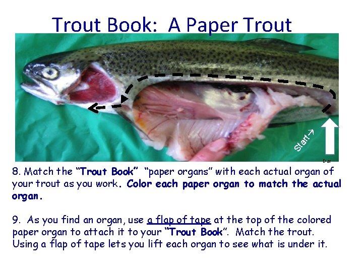 "St ar t Trout Book: A Paper Trout Dar 8. Match the ""Trout Book"""