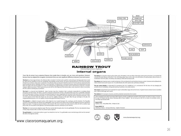 www. classroomaquarium. org. 25