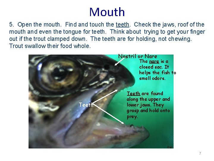 Mouth 5. Open the mouth. Find and touch the teeth. Check the jaws, roof