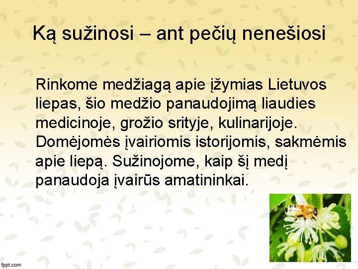 Ką sužinosi – ant pečių nenešiosi Rinkome medžiagą apie įžymias Lietuvos liepas, šio medžio