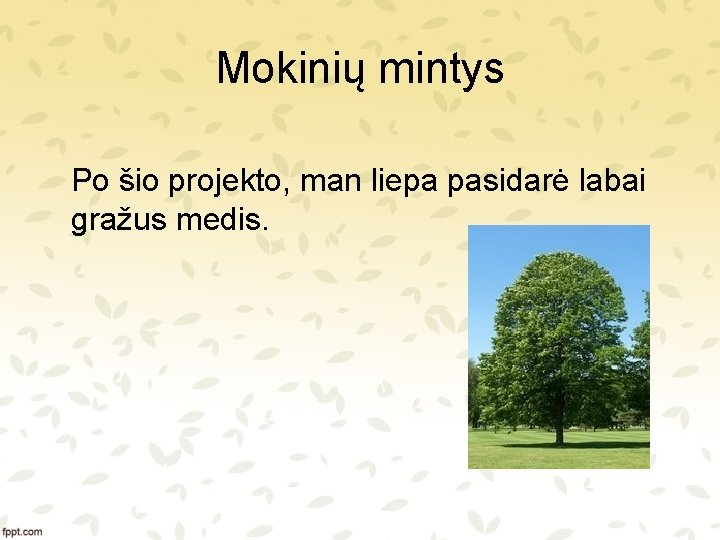 Mokinių mintys Po šio projekto, man liepa pasidarė labai gražus medis.