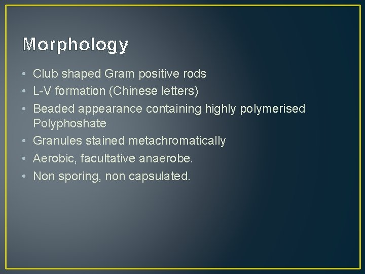 Morphology • Club shaped Gram positive rods • L-V formation (Chinese letters) • Beaded