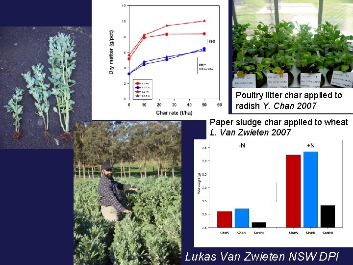 Poultry litter char applied to radish Y. Chan 2007 Paper sludge char applied to