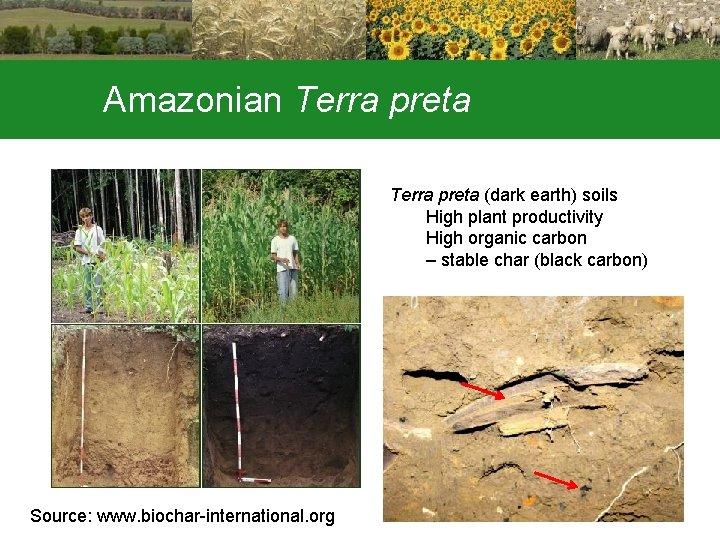 Amazonian Terra preta (dark earth) soils High plant productivity High organic carbon – stable