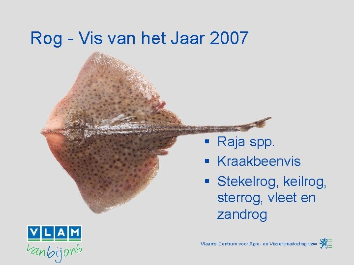 Rog - Vis van het Jaar 2007 § Raja spp. § Kraakbeenvis § Stekelrog,
