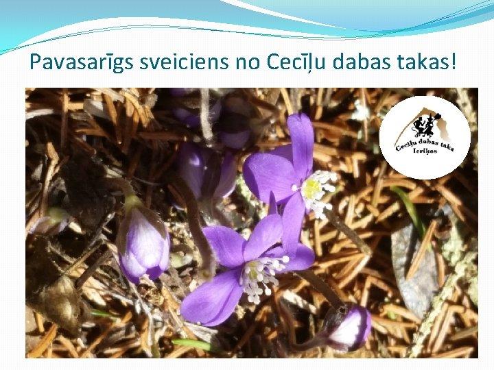 Pavasarīgs sveiciens no Cecīļu dabas takas!