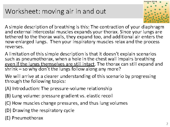 Worksheet: moving air in and out A simple description of breathing is this: The