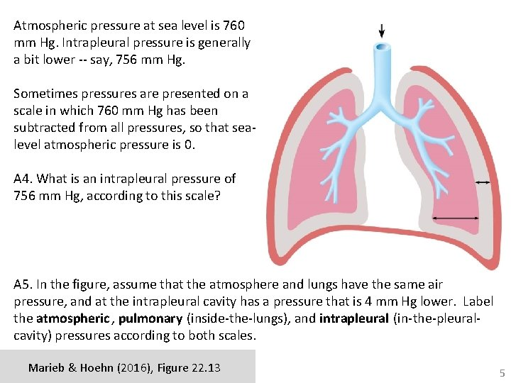 Atmospheric pressure at sea level is 760 mm Hg. Intrapleural pressure is generally a
