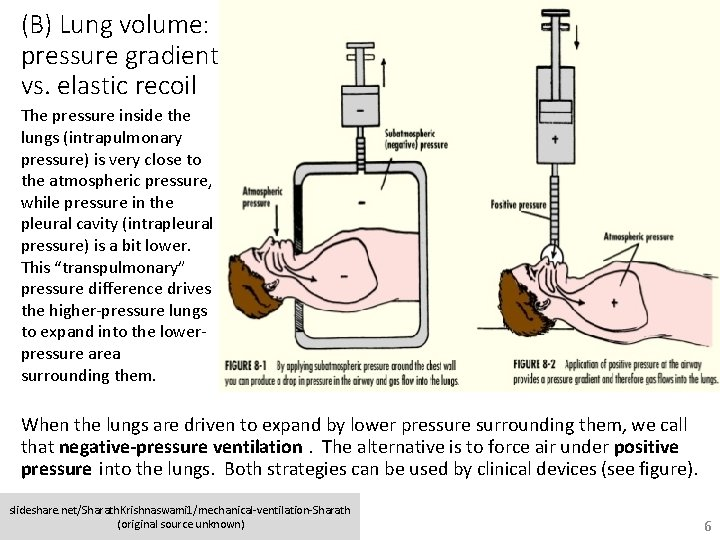 (B) Lung volume: pressure gradient vs. elastic recoil The pressure inside the lungs (intrapulmonary