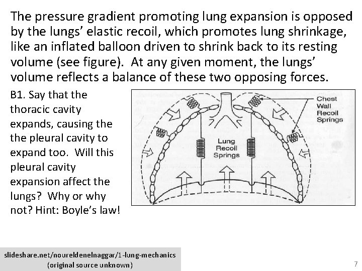 The pressure gradient promoting lung expansion is opposed by the lungs' elastic recoil, which