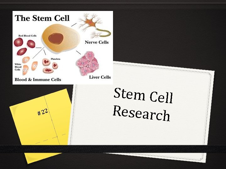 #22 Stem Cell Research