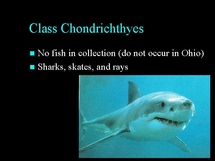 Class Chondrichthyes No fish in collection (do not occur in Ohio) n Sharks, skates,