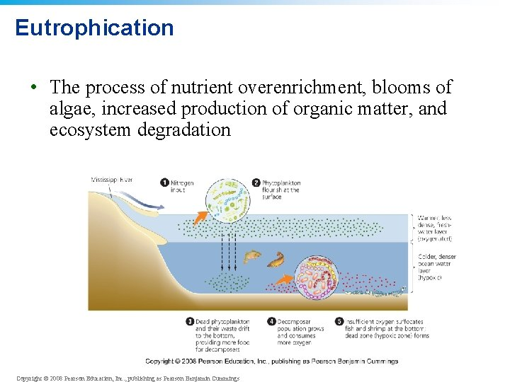 Eutrophication • The process of nutrient overenrichment, blooms of algae, increased production of organic