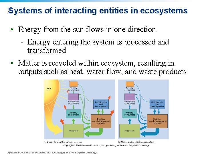 Systems of interacting entities in ecosystems • Energy from the sun flows in one