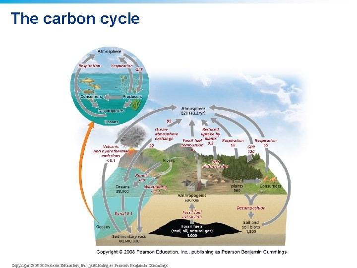 The carbon cycle Copyright © 2008 Pearson Education, Inc. , publishing as Pearson Benjamin