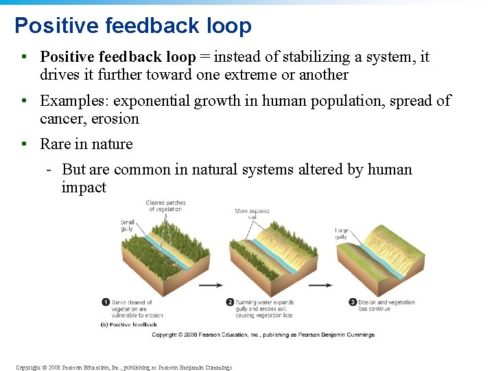 Positive feedback loop • Positive feedback loop = instead of stabilizing a system, it