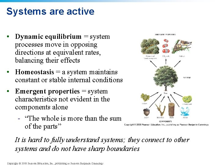 Systems are active • Dynamic equilibrium = system processes move in opposing directions at