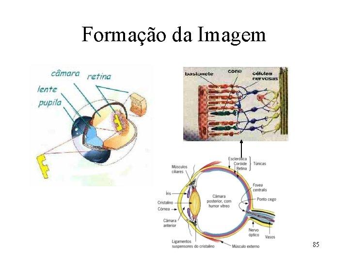 Formação da Imagem 85