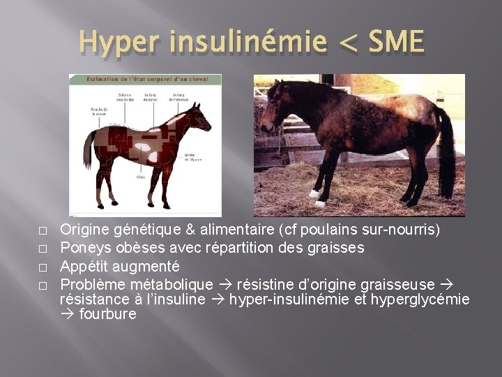 Hyper insulinémie < SME � � Origine génétique & alimentaire (cf poulains sur-nourris) Poneys