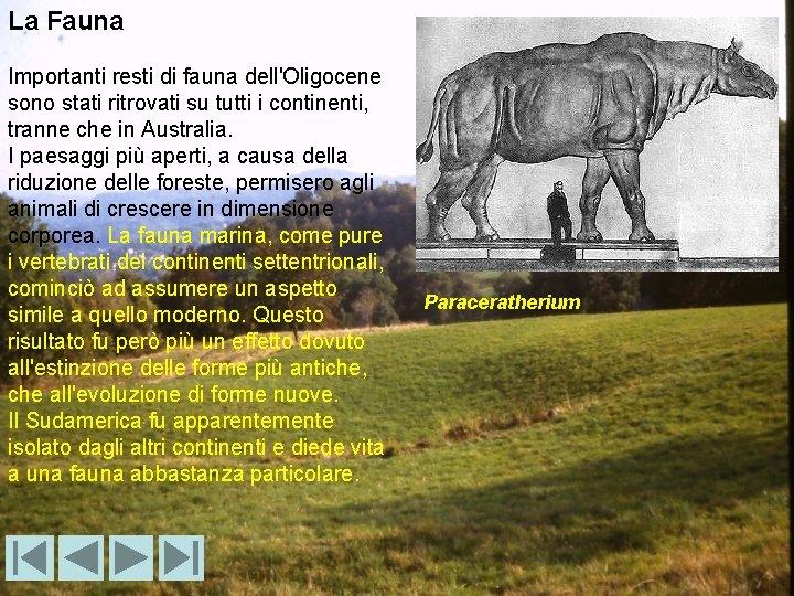 La Fauna Importanti resti di fauna dell'Oligocene sono stati ritrovati su tutti i continenti,