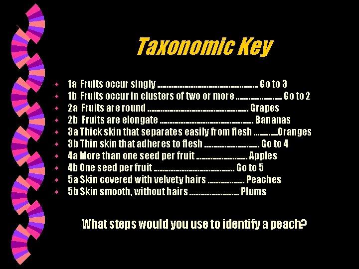 Taxonomic Key w w w w w 1 a Fruits occur singly. . .