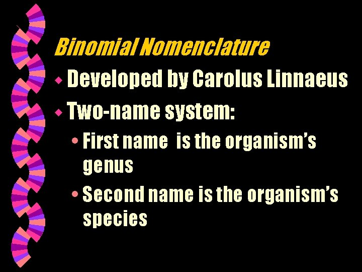 Binomial Nomenclature w Developed by Carolus Linnaeus w Two-name system: • First name is
