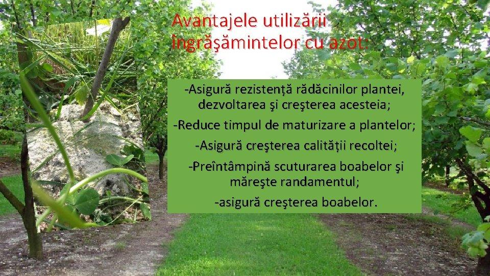 Avantajele utilizării îngrăşămintelor cu azot: -Asigură rezistență rădăcinilor plantei, dezvoltarea şi creşterea acesteia; -Reduce