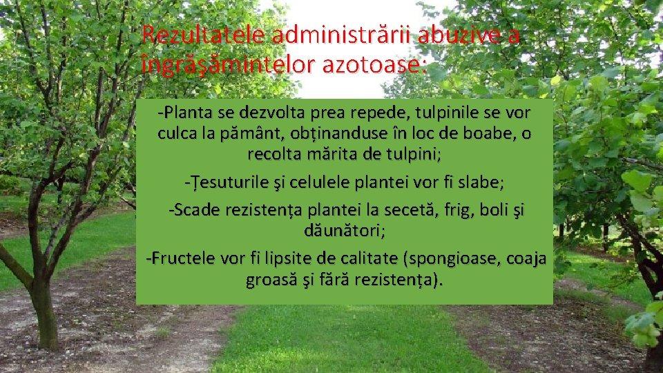 Rezultatele administrării abuzive a îngrăşămintelor azotoase: -Planta se dezvolta prea repede, tulpinile se vor