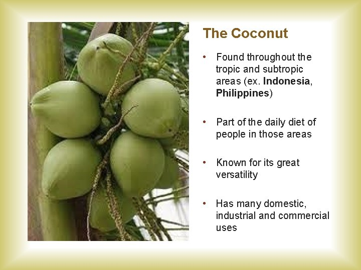 The Coconut • Found throughout the tropic and subtropic areas (ex. Indonesia, Philippines) •
