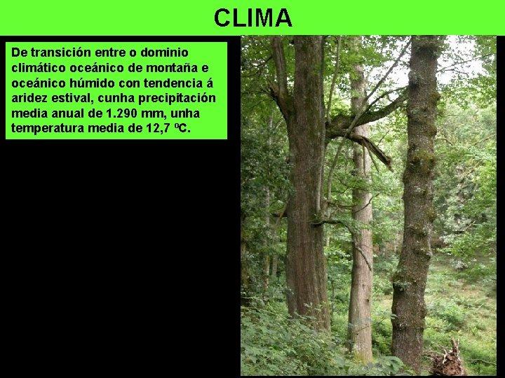 CLIMA De transición entre o dominio climático oceánico de montaña e oceánico húmido con