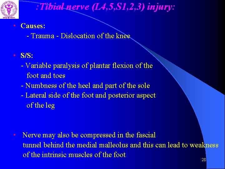 : Tibial nerve (L 4, 5, S 1, 2, 3) injury: • Causes: -