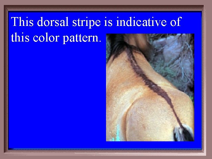 This dorsal stripe is indicative of this color pattern. 2 -500