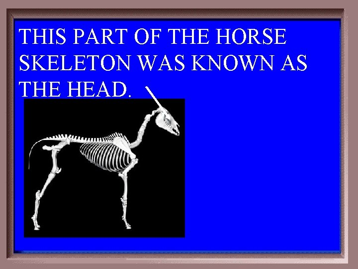 THIS PART OF THE HORSE SKELETON WAS KNOWN AS THE HEAD. 1 - 100