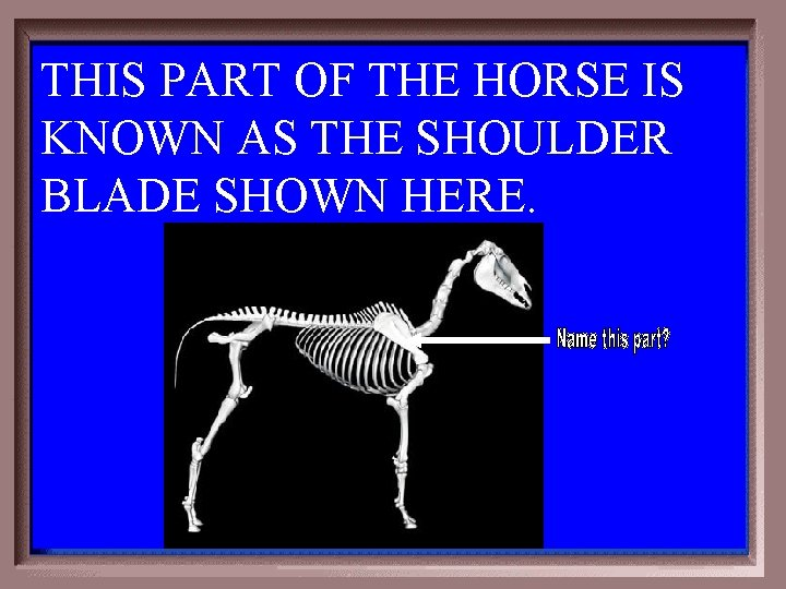 THIS PART OF THE HORSE IS KNOWN AS THE SHOULDER BLADE SHOWN HERE. 4