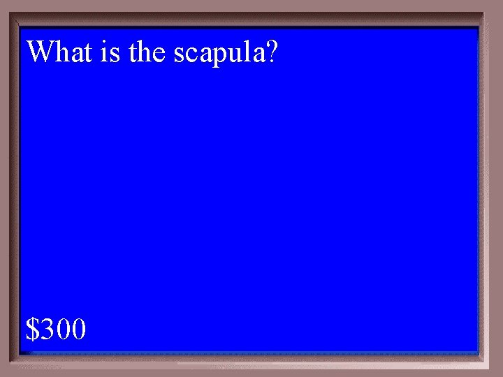 What is the scapula? 1 - 100 4 -300 A $300