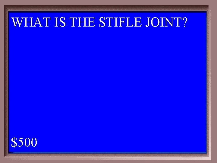 WHAT IS THE STIFLE JOINT? 1 - 100 4 -500 A $500