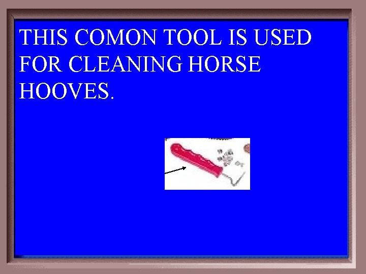 THIS COMON TOOL IS USED FOR CLEANING HORSE HOOVES. 1 - 100 6 -100
