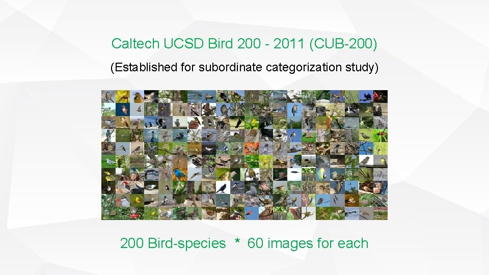 Caltech UCSD Bird 200 - 2011 (CUB-200) (Established for subordinate categorization study) 200 Bird-species
