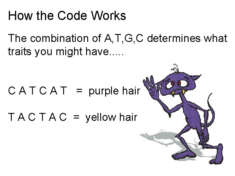 How the Code Works The combination of A, T, G, C determines what traits