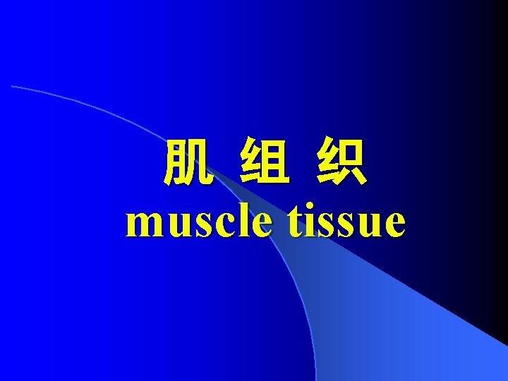 肌 组 织 muscle tissue